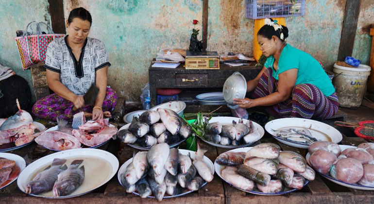 University of British Columbia | Fish market in Bagan, Myanmar.