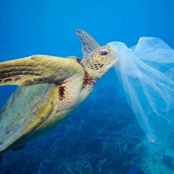 Troy Mayne/WWF | Plastikmüll ist eine große Gefahr nicht nur für Schildkröten.