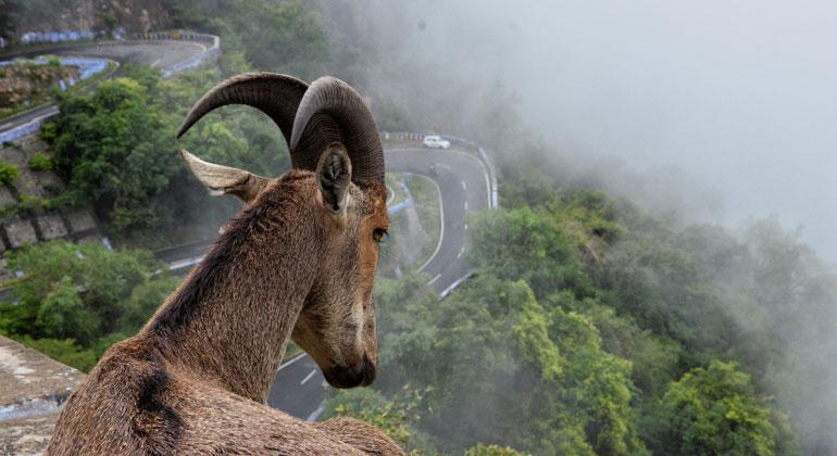 unsplash.com | aslam-mac | Durch die Industrialisierung werden die Lebensräume vieler Tiere immer weiter eingeschränkt und Ökosysteme isoliert.