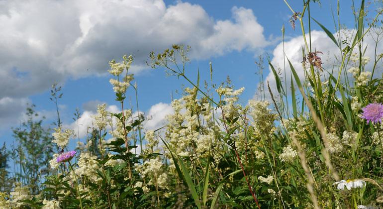 Bigi Alt | Bunte Wiesen bieten Insekten Schutz und Nahrung.