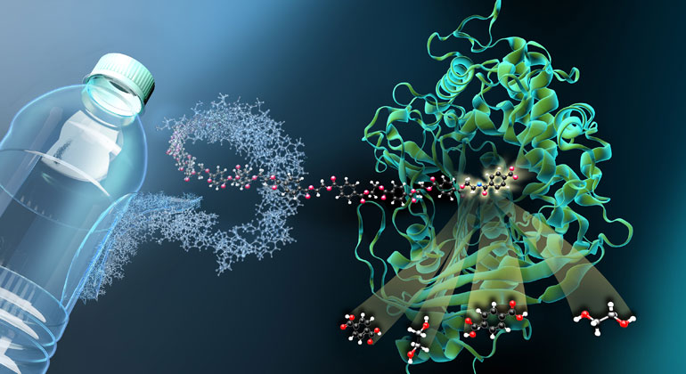 M. Künsting/HZB | Das Enzym MHETase ist ein riesiges komplex gefaltetes Molekül. MHET-Moleküle aus PET-Kunststoff docken an einer aktiven Stelle im Inneren der MHETase an und werden dort aufgespalten.