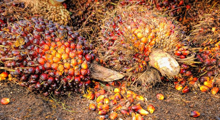 pixabay.com | tristantan | Die meisten pflanzlichen Rohstoffe für Europas Nutzung werden aus Asien bezogen, nach Baumwolle (1,7 Millionen Hektar v.a. aus Indien, China und Pakistan) steht Palmöl hier an zweiter Stelle.
