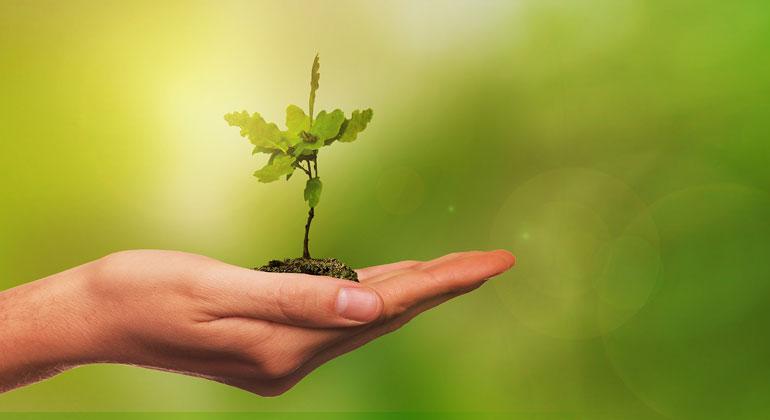 pixabay.com | NicoWall | Doch trotz der übertriebenen Darstellung des Klimaschutzes durch Bäume: Die Ergebnisse der Studie sind vielversprechend und auch die Kritiker sind sich einig, dass Wiederaufforstung einen wichtigen Beitrag zur Bekämpfung der Klimakrise leisten kann.
