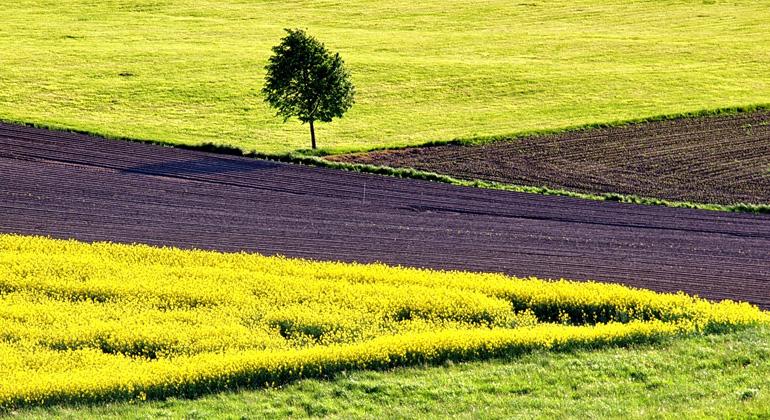 Landwirtschaft: EU hält an Flächenprämie fest