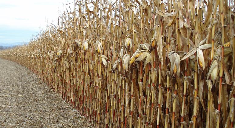 pixelio.de   Maria-Lanznaster   Trockenheit vermindert das Pflanzenwachstum und Erträge