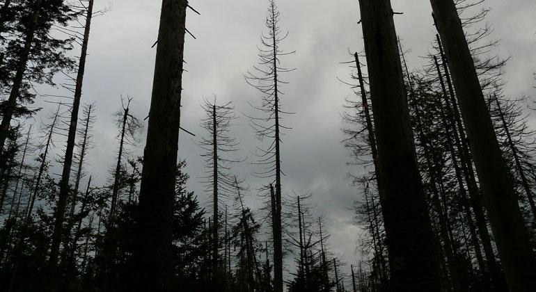 pixabay.com   Hans   Die Ausbreitung der Fichten-Borkenkäfer ist in einigen Privatwäldern so massiv, dass manche Waldbesitzer den Kampf gegen den Borkenkäfern aufgegeben haben. Es fehlen auch schlicht die Kapazitäten für die Aufarbeitung der Borkenkäferschäden.
