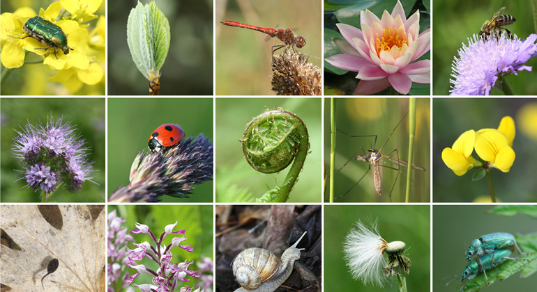 Erhalt der Artenvielfalt zur Chefsache machen