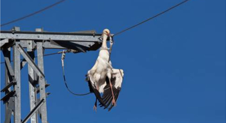 Power lines: Fatal for migratory birds