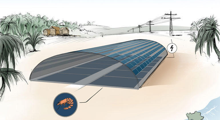 "Aqua-PV: ""SHRIMPS"" Project Combines Aquaculture and Photovoltaics"