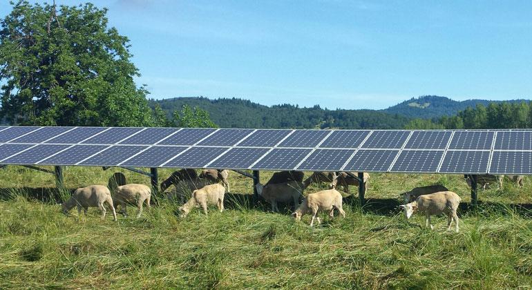 Solarstrom hilft bei der Vermeidung von Ernteschäden