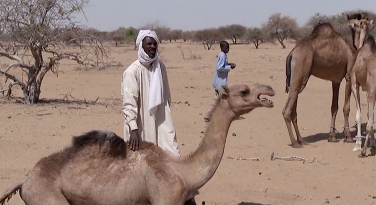 SWR | Mohammed Ibrahim hat nur noch fünf Kamele - der Rest der 60-köpfigen Herde ist verdurstet.