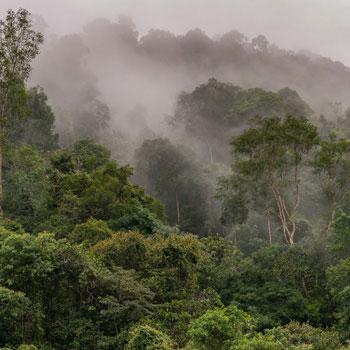 Ola Jennersten / WWF Schweden | Regenwald auf Sumatra |