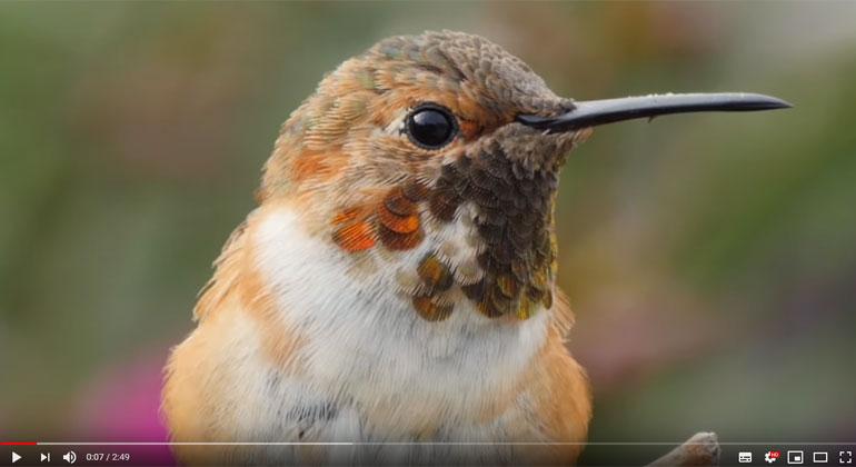 American Bird Conservancy / Screenshot