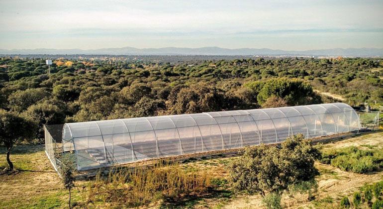 MPI f. Entwicklungsbiologie/ M. Exposito-Alonso | Die Forscher haben die Anpassungsfähigkeit von Arabidopsis-Pflanzen an den Klimawandel in Gewächshäusern untersucht. Die Art wird unter dem immer trockener werdenden Klima rund um das Mittelmeer ihre genetische Vielfalt verlieren.