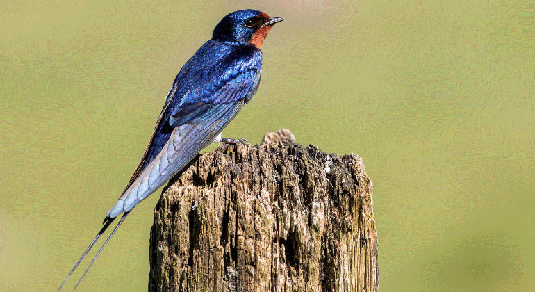 Birds in serious decline at Lake Constance
