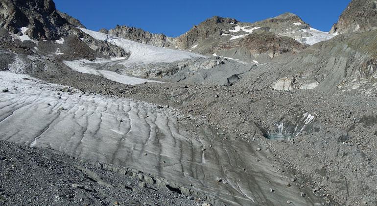 Pflanzen erobern Gletscherflächen überraschend schnell zurück