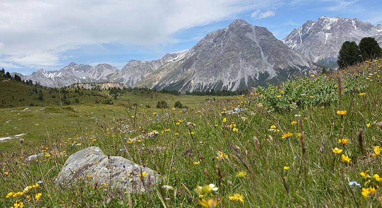 Alpenflora im Klimawandel