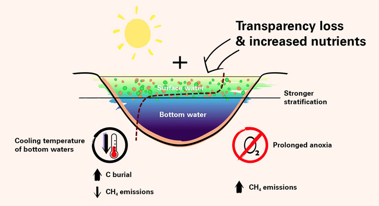"""University of Basel   Effects of climate change on the water temperature, water transparency, density stratification and oxygen content in lakes. In contrast to clear lakes, nutrient-rich and thus more turbid lakes develop a """"thermal shield"""" that can cause the deeper part of the lake to cool down."""