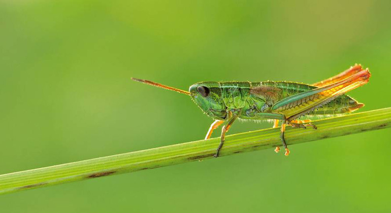 Insect decline more extensive than suspected