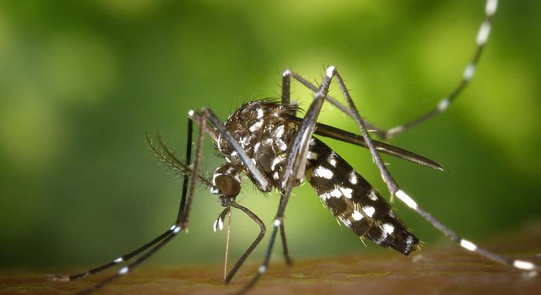 pixabay.com | Wikilmages | Krankheitsüberträger wie die Asiatische Tigermücke können sich durch den Klimawandel weiter ausbreiten.