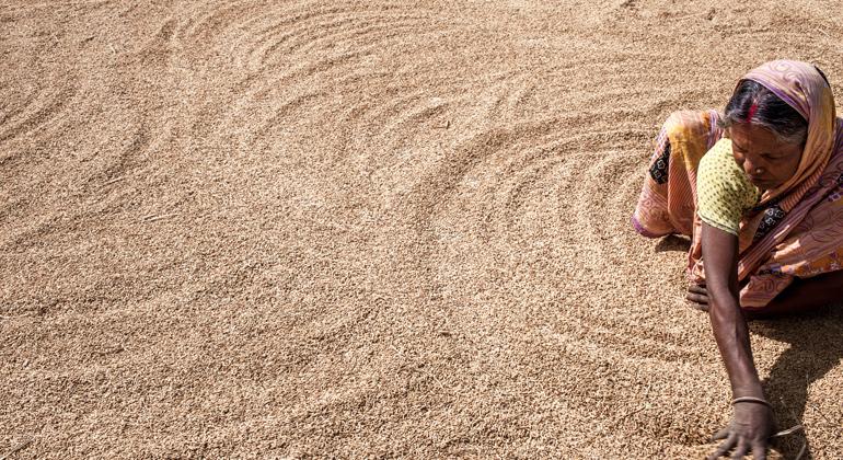 Thomas Rommel | Welthungerhilfe | Eine Reisbäuerin aus Dudhitanr im indischen Bundesstaat Jharkhand verteilt die Ernte zum Trocknen. Reis, das wichtigste Grundnahrungsmittel für mehr als die Hälfte der Weltbevölkerung, reagiert empfindlich auf Temperaturschwankungen, wodurch Erträge stark anfällig für Klimafolgen sind