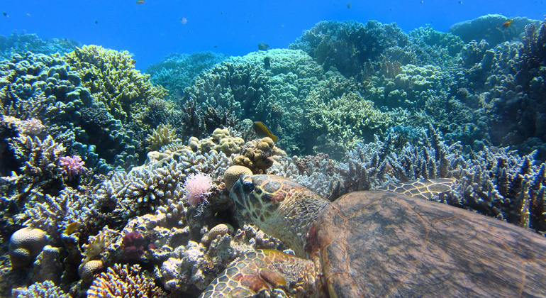 "Science Advances ""Living evidence of a fossil survival strategy raises hope for warming-affected corals"""