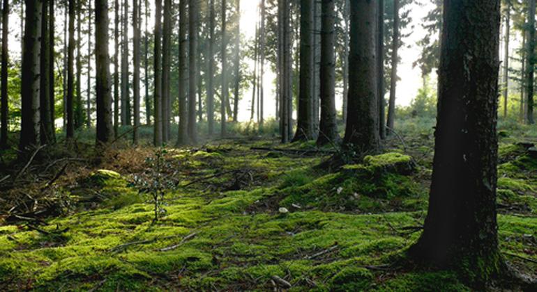 EU schafft Klarheit bei Klimaschutz durch Wälder und Böden