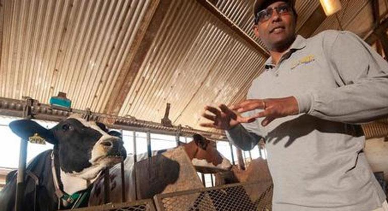 Die Kuh – als Methan-Produzentin jetzt ein Auslaufmodell?