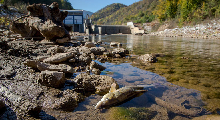 Europe's rivers are damned by dams: Plans for more than 8,700 new hydropower plants