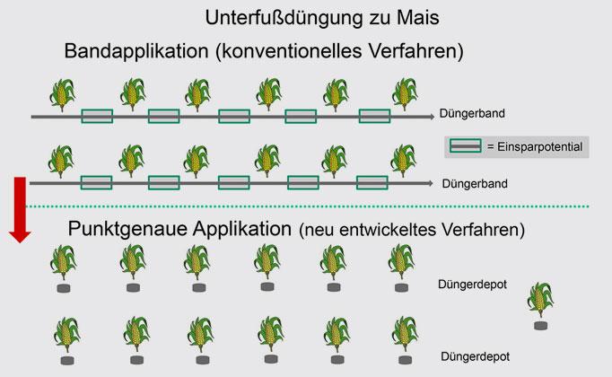 Max Bouten/TH Köln   Bei der herkömmlichen Unterfußdüngung wird ein kontinuierliches Düngeband ausgebracht (oben), bei der punktgenauen Applikation erhält jedes Saatkorn synchron zur Kornablage eine kleine Düngerportion.