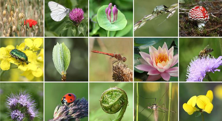Zusammenhang: Bevölkerungsentwicklung und Rückgang der Artenvielfalt