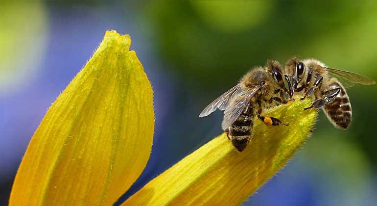 Umfrage: Bundesregierung tut zu wenig gegen Artensterben