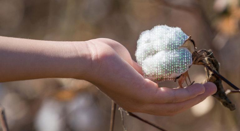 Baumwolle: Nur grün gesponnen oder wirklich Bio