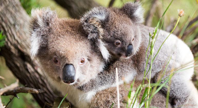 WWF: Zahl bedrohter Arten 2020 auf Rekordniveau