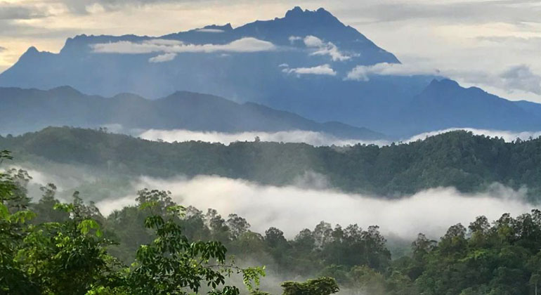 Forest fragmentation hits wildlife hardest in the tropics