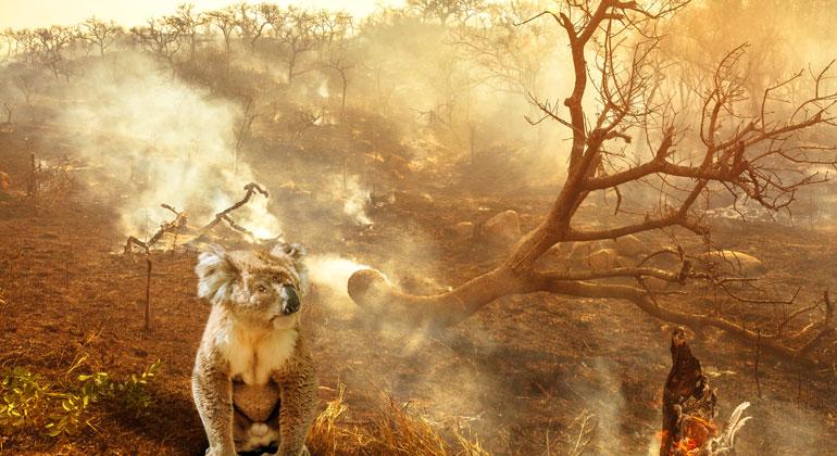 Depositphotos | bennymarty | Buschfeuer in Australien