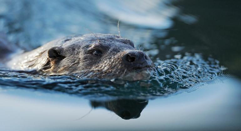 Neue internationale Studie fordert Notfallplan gegen das Artensterben in Flüssen, Seen und Feuchtgebieten