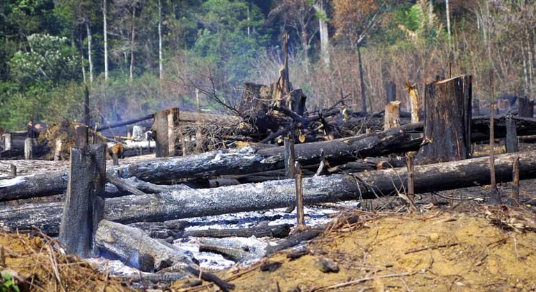 Vernichtung von Regenwald: McDonald's, Nestlé, Nike und Co. brechen ihre Versprechen