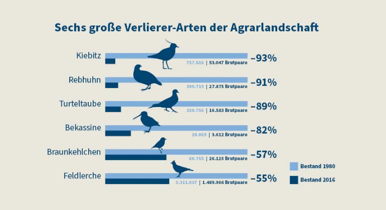 NABU | Seit 1980 sind über zehn Millionen Brutpaare der Agrarvögel verloren gegangen