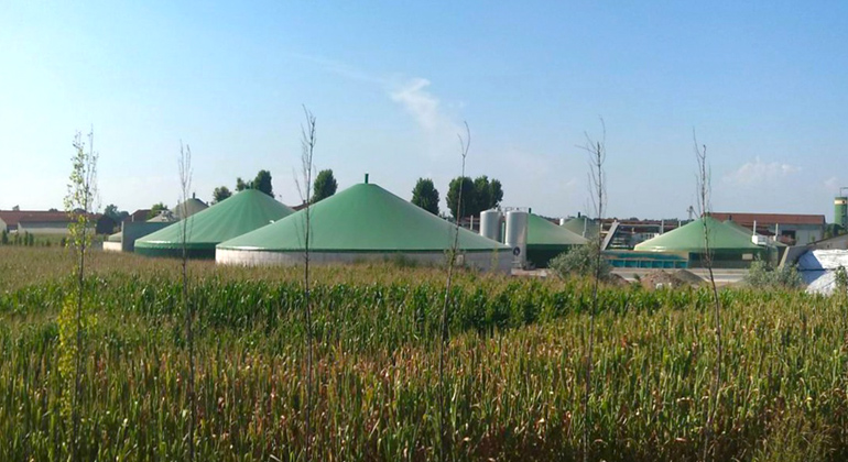 "Sustainable biofuels from cultivated biomass need to be a part of the European ""Green Deal"""