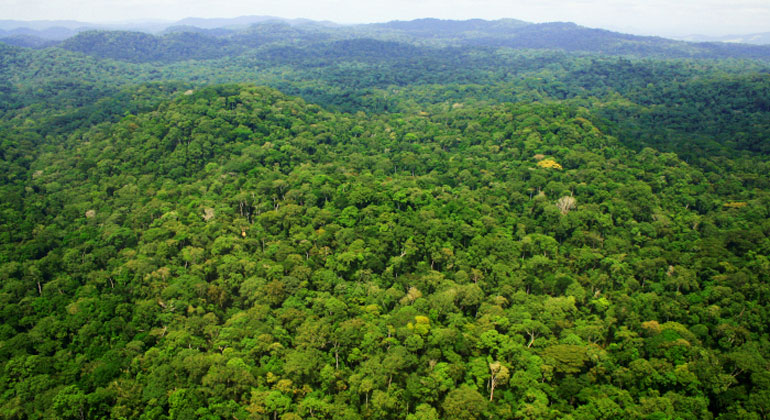 africamuseum.be | Above Ivindo National Park, central Gabon. Credit: Kat
