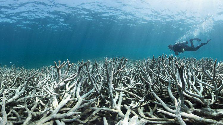 Richard Vevers/The Ocean Agency