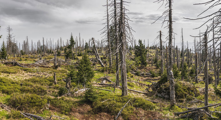 BMEL legt Waldschadenszahlen vor