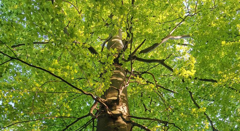 Waldzustandserhebung 2019: Die Trockenheit setzte den Bäumen weiterhin zu