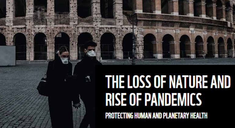 The loss of nature and rise of pandemics
