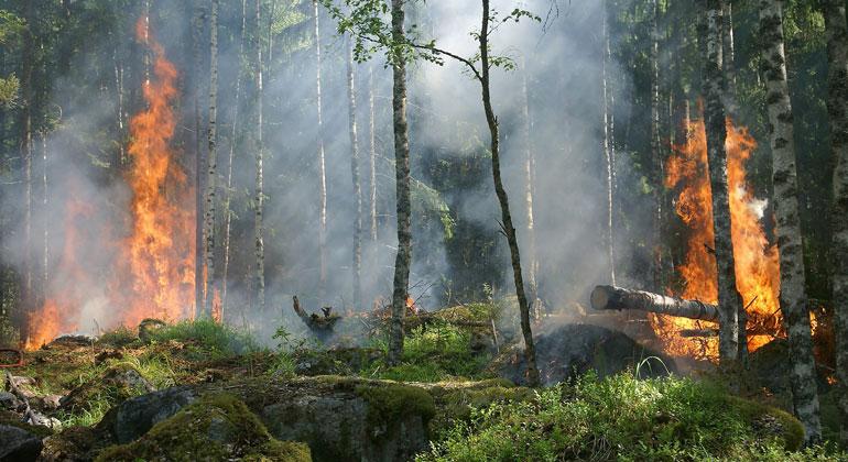 pixabay.com | Ylvers | Ein Waldbrand kann in Holz und Boden vorhandene radioaktive Partikel freisetzen.