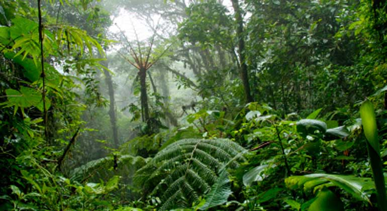 The limits of rainforest growth