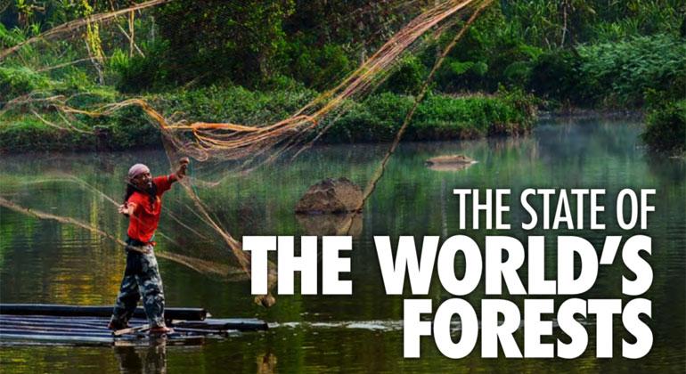 Waldzerstörungsbericht: WWF zum FAO-Waldzustandsbericht 2020