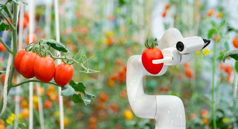 Von künstlichem Fleisch bis zum Verfeinern der Photosynthese: künftige Innovationen im Nahrungsmittelsystem