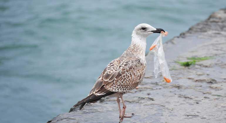 Fotolia.com | HellenSergeyeva | Auch Seevögel sollen von den Managementplänen profitieren.